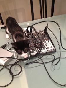 DJ-gato.